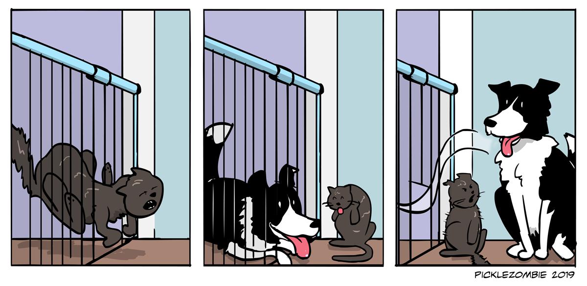 Animal physics